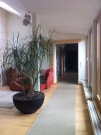 Hallway to the bedroom & bathrooms