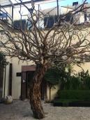 Courtyard at Atrio