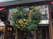 Every Pub has Flowers!
