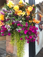 Glorious Hanging Baskets